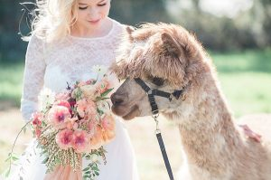 Bruid met alpaca